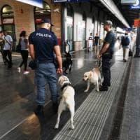 Firenze, cane scopre nascondiglio di droga