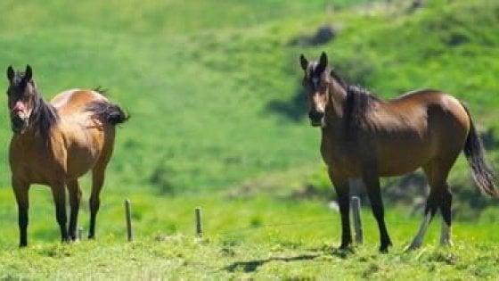 Il giallo dei cavalli morti, un altro caso nel centro di rec