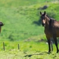 Il giallo dei cavalli morti, un altro caso nel centro di recupero di Volterra