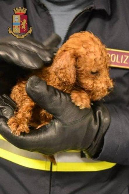 In auto con 7 cuccioli bagnati e senza cibo: due denunciati a Grosseto