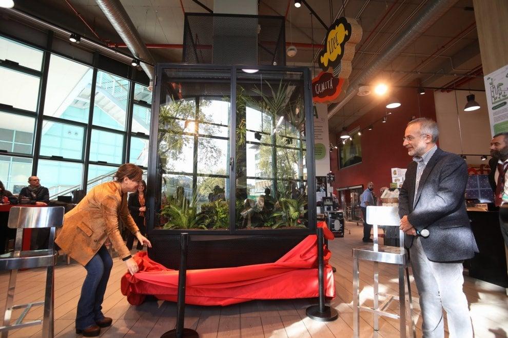 Piante tropicali per rigenerare l'aria in un supermercato: il primo esperimento a Firenze