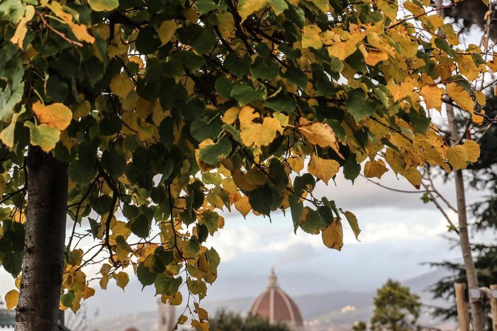 Firenze, la meraviglia delle foglie che cadono