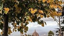 La meraviglia delle foglie che cadono