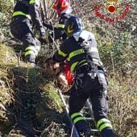 Pistoia, cane cade in un dirupo: salvato dai vigili del fuoco