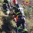 Pistoia, cane cade in un dirupo: salvato dai vigili  del fuoco -  foto