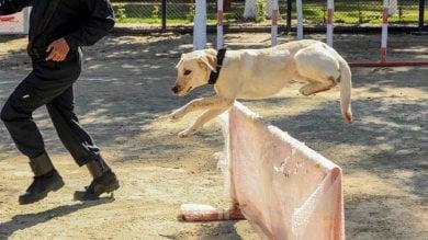 Rep :   Firenze, 40 guardie per multare i padroni-cafoni dei cani