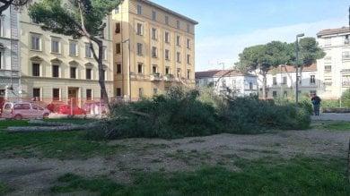 Firenze, blitz in piazza della Vittoria: abbattuti i pini -  foto