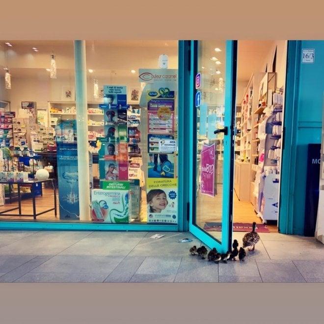 """Firenze, coronavirus: """"Ma dove sono tutti?"""" mamma papera evade dal parco ed entra nel centro commerciale Galleria fotografica"""