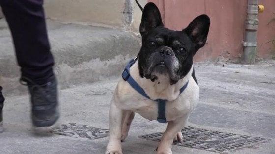 Coronavirus, il consiglio dei medici cinesi: portate a spasso il cane con le scarpette