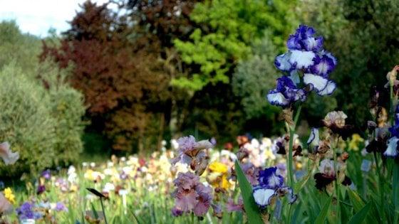 """Firenze, il presidente del Giardino dell'iris: """"Apriamolo prima del 18 maggio o perderemo le fioriture"""""""