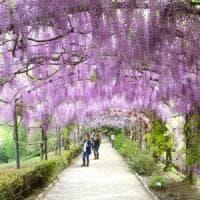 Firenze, il 2 giugno riapre il parco di Villa Bardini