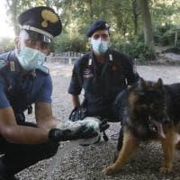 Firenze, droga: la centrale di spaccio tra le Cascine e la linea 1 del tram