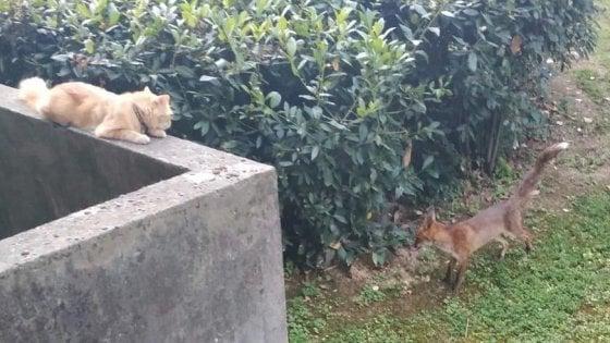 Il gatto e la volpe : la strana amicizia che vive di notte in un quartiere di Firenze