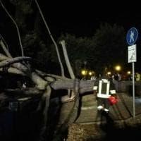 San Casciano Val di Pesa: cade un grosso albero ai giardini, ferita una bambina e un uomo