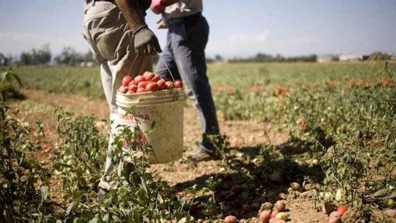 """Agricoltura: """"Centinaia di lavoratori senza sussidi"""""""