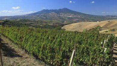 Toscana, niente nuovi dazi Usa, esulta il mondo del vino