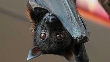 Notte da Batman nel parco con i pipistrelli