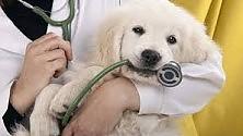 Veterinari gratis per un giorno