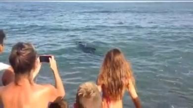 Loano, un 'delfino' gioca con i bagnanti   E' la mascotte dei bambini -  video