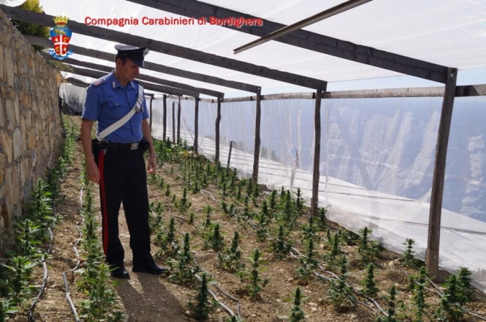 Troppe spese al posto dei fiori in serra 800 piante di for Serra per piante