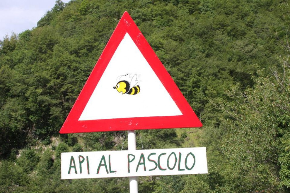 Nascono gli 'apiari urbani'