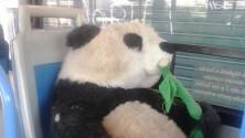 """Il panda """"abbandonato"""" viaggia sulla linea 66"""