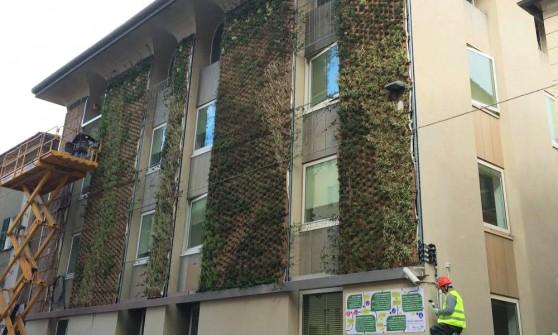Sestri ponente cos il giardino si arrampica sul palazzo - Giardino verticale madrid ...