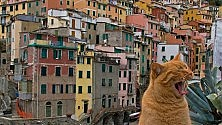 Tremila scatti per scoprire la Liguria