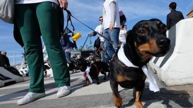 Primavera, che successo con la Dog's Run