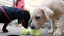 """Il gelato dell'estate è gusto """"doggy"""": speciale per i quattrozampe  Vd     Ft"""
