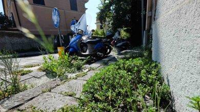 Marciapiedi invasi dalle erbacce,  strade-giungla ai margini del centro