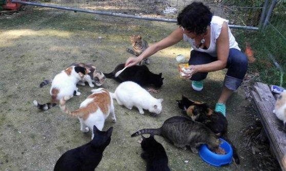 """Il Grande Fratello """"monitora"""" i gatti, a Genova più di seimila randagi"""