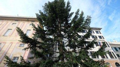 L'albero di Natale a Km zero si innalza in meno di un minuto  Timelapse     Le foto
