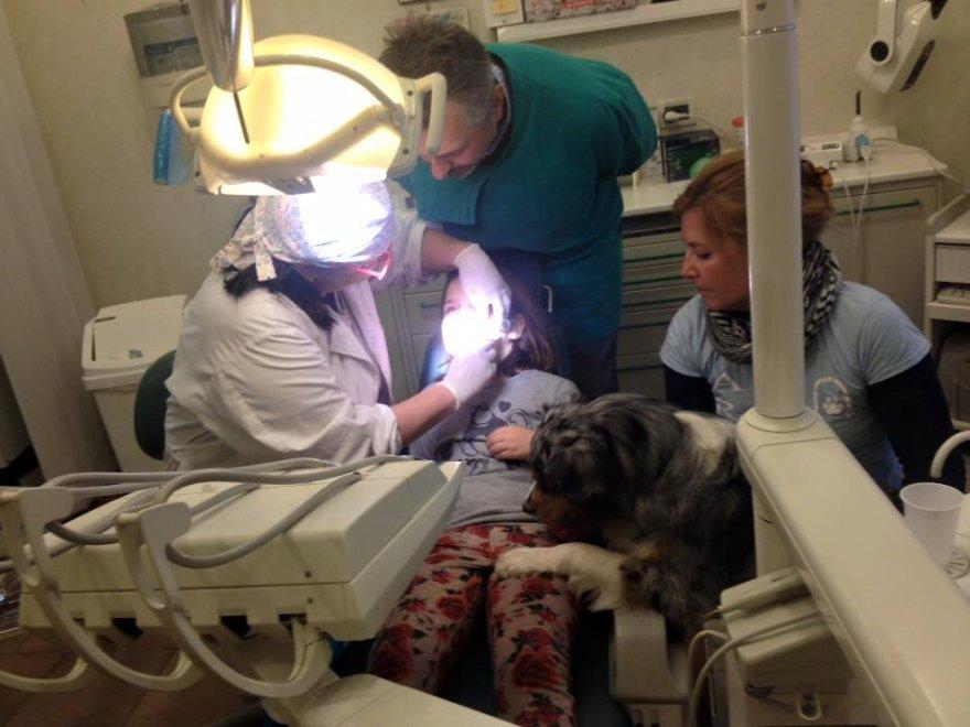 Sestri, con il cane (o il gatto) dal dentista per non aver paura