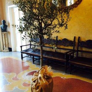 Un ulivo da Lavagna a Milano: aria di Liguria al Bosco Verticale