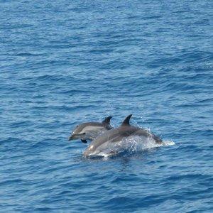 Bbba Santuario Dei Cetacei Due Weekend Con Delfini Balene