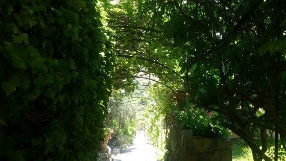 Bordighera scrittrici in erba l nel giardino della - Quando seminare erba giardino ...