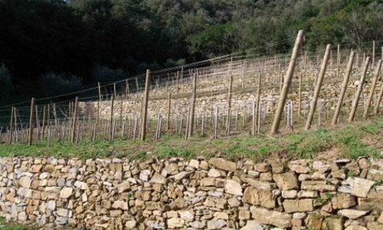 Muretti a secco, quattro milioni dalla Regione Liguria - Repubblica.it