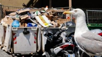 Via  rifiuti e vespasiani,  il  repulisti del Comune per lo sconcio di Caricamento    Foto