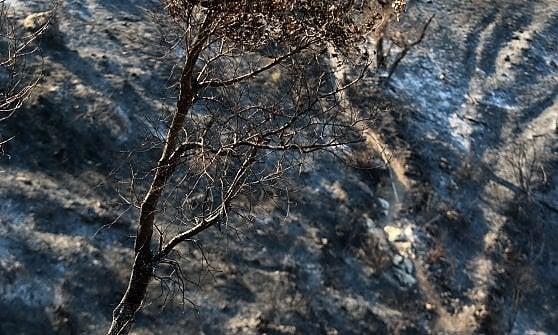 Ancora incendi in Liguria, a Carasco e nell'imperiese