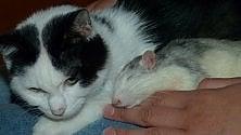 Sanremo, la sorprendente amicizia tra un topo e un gatto  Video