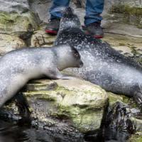 Torta di battesimo per Baffo la foca, Aldo, Giovanni e Giacomo i pinguini