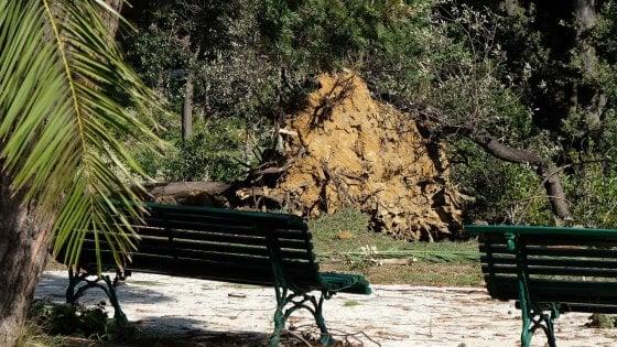 Corso Firenze, un albero crolla contro una scuola a Genova