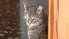 A Genova da Miagolandia  la casa-famiglia  per gatti invalidi    VIDEO