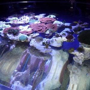 Montecarlo, alla scoperta dei coralli fluorescenti