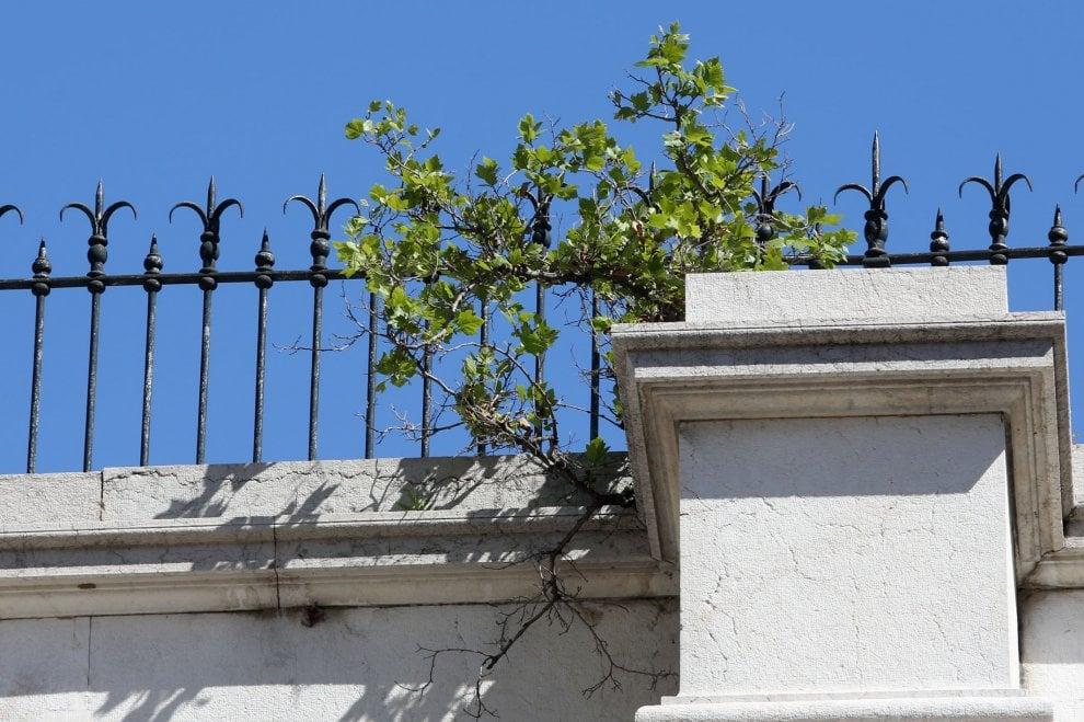 Genova, la vegetazione si fa strada sul Ponte Monumentale