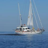 Il tesoro della balena Il Santuario dei cetacei tra  turismo e speculatori