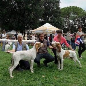 Festa in Valpolcevera all'allevamento Sodini: Ercole è il bracco più bello del mondo