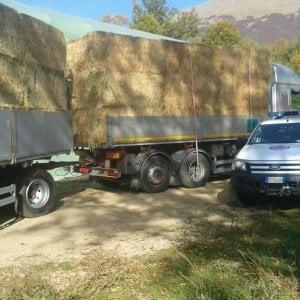 Venti tonnellate di fieno dalla Liguria ad Amatrice