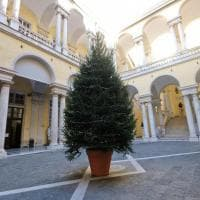 L'albero di Natale all'Università